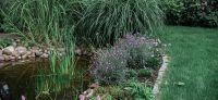 14_teich_entspannungsbereich_bepflanzung