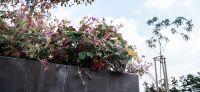 09_gartenplanung_blaustein_modern_bepflanzung_wasserbecken_wasserspiel