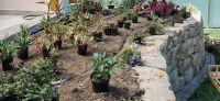 12_Bepflanzung_Bewaesserung