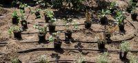 13_Bepflanzung_Bewaesserung
