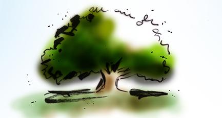 Habitus-Baumform-Gehölzschnitt