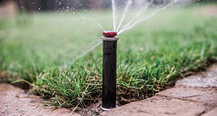 Unser Pflanzen brauchen Wasser!