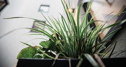 Gartenplanung-Gartengestaltung-Pflanzkübel-Pflanzenarrangement